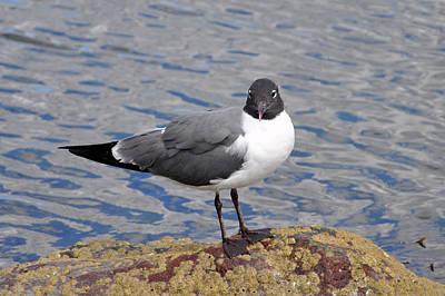 Photograph - Bird by Glenn Gordon