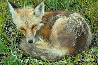 Photograph - Nap In The Grass by Adam Jewell
