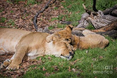 Photograph - Nap Time  by Karen Jorstad