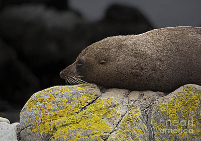 Photograph - Nap Time by Peter Kennett