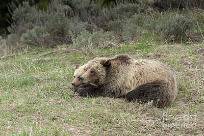 Photograph - Nap Time by Sandra Bronstein