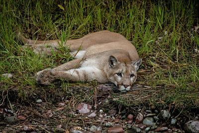 Photograph - Nap Time by Teresa Wilson