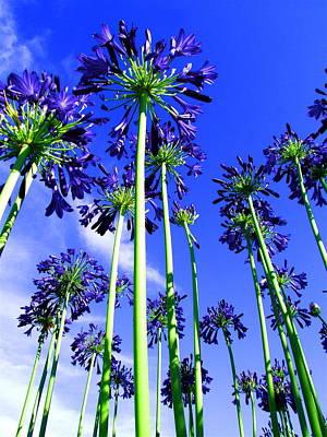 Napa Blooms Original by Sarita Rampersad