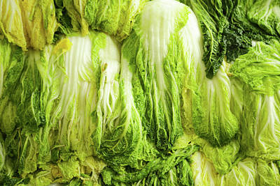 Photograph - Napa Cabbage by Hyuntae Kim