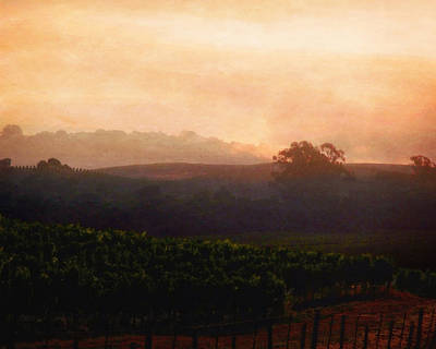 Photograph - Napa Fog by Timothy Bulone