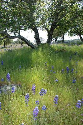 Napa Hills Meadow Print by Dallas Hyatt
