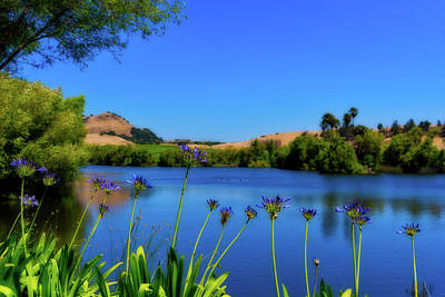 Photograph - Napa Serenity by Stephen Anderson