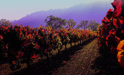 Photograph - Napa Valley California 2 by Xueling Zou