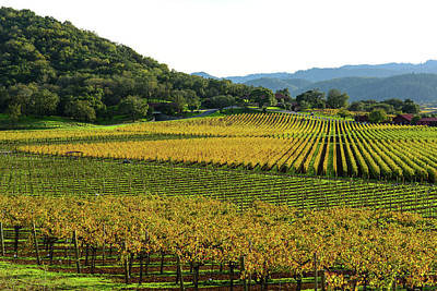 Chardonnay Photograph - Napa Valley California In Autumn by Brandon Bourdages