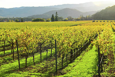 Photograph - Napa Valley California Vineyard In The Fall by Brandon Bourdages