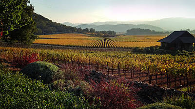 Photograph - Napa Valley California by Xueling Zou
