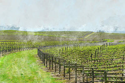 Photograph - Napa Valley Grape Vineyard In Spring by Brandon Bourdages