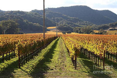 Pastoral Vineyard Photograph - Napa Valley Vineyard . 7d9020 by Wingsdomain Art and Photography