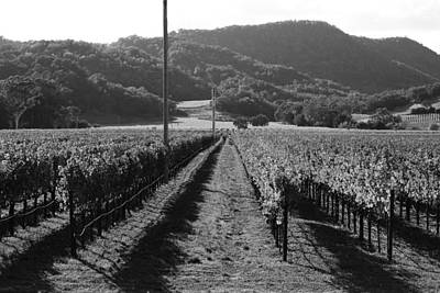 Pastoral Vineyard Photograph - Napa Valley Vineyard .  Black And White . 7d9020 by Wingsdomain Art and Photography