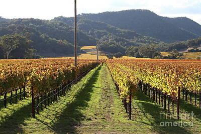 Photograph - Napa Valley Vineyard 7d9020 by San Francisco