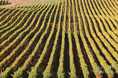 Photograph - Napa Valley Vineyard 7d9061 by San Francisco