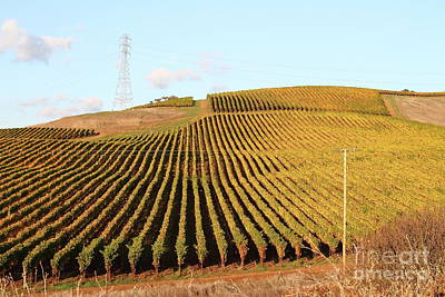 Photograph - Napa Valley Vineyard 7d9064 by San Francisco