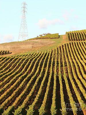 Photograph - Napa Valley Vineyard 7d9065 by San Francisco