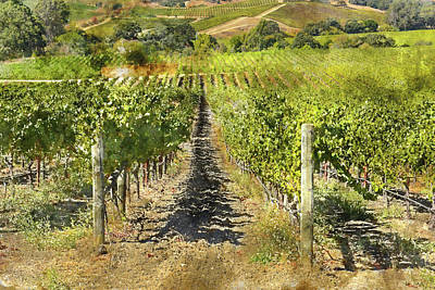 Photograph - Napa Valley Vineyard During Harvest Season by Brandon Bourdages