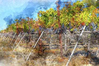 Tree Photograph - Napa Valley Vineyard In Autumn by Brandon Bourdages