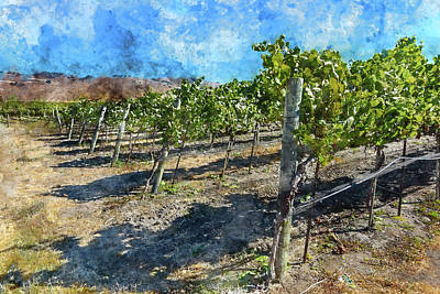 Photograph - Napa Valley Vineyard Ona Blue Sky Day by Brandon Bourdages