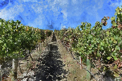 Photograph - Napa Valley Vineyard Rows by Brandon Bourdages