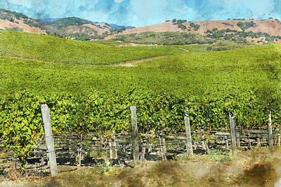 Napa Valley Vineyard With Rows Of Grapes Art Print by Brandon Bourdages