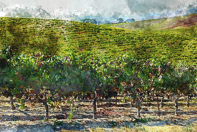 Photograph - Napa Valley Vineyards by Brandon Bourdages