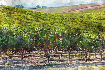 Winery Digital Art - Napa Valley Vineyards In California by Brandon Bourdages