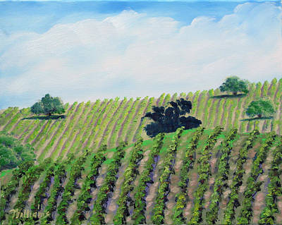 Napa Valley Vineyard Painting - Napa Vines And Oaks by William Williams