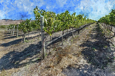 Photograph - Napa Vineyard  by Brandon Bourdages