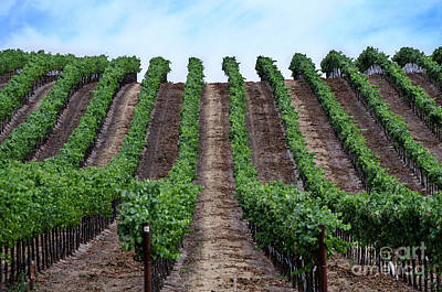 Photograph - Napa Vineyards by Judy Wolinsky