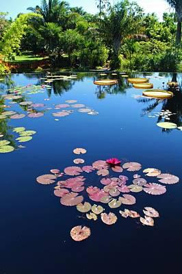 Photograph - Naples Botanical Garden Water Lilies II by Michiale Schneider