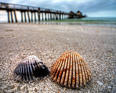 Photograph - Naples Pier Seashells Naples Fl Florida by Toby McGuire