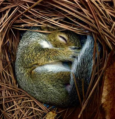 Photograph - Napping Nest by Dee Dee Whittle