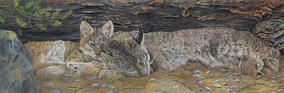 Naptime - Canadian Lynx Original