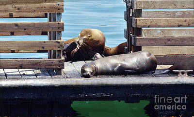 Photograph - Naptime by Debby Pueschel