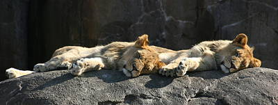 Photograph - Naptime For The Twins by David Dunham