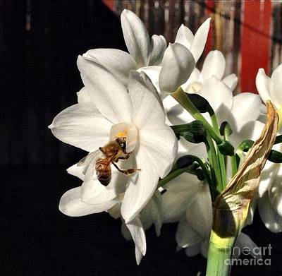 Photograph - Narcissus And The Bee 1 by Daniele Smith