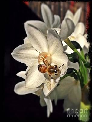 Photograph - Narcissus And The Bee 3 by Daniele Smith