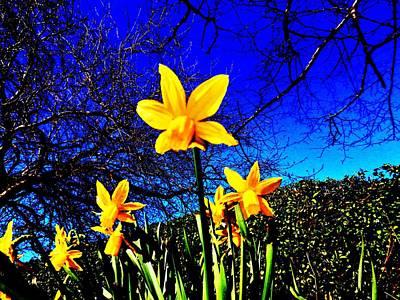 Narcissus Bloom Art Print