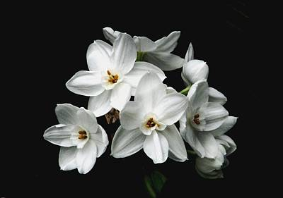 Photograph - Narcissus The Breath Of Spring by Angela Davies