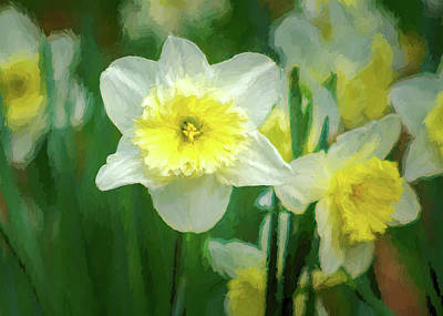 Photograph - Narcissus by James Barber