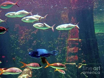 Photograph - Nassau Aquarium by Gary Wonning