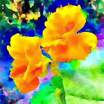 Photograph - Nasturtiums 1 by Ronda Broatch