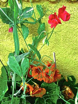 Photograph - Nasturtiums And Sweetpeas by Stephanie Moore