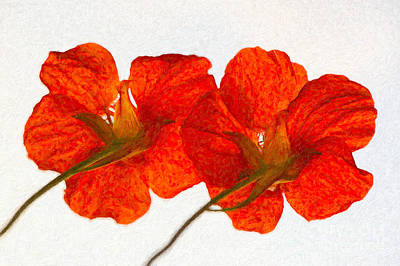 Digital Art - Nasturtiums On White by Ari Salmela