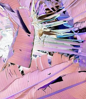 Photograph - Nat. Abstr. 1 Cn by John Hintz