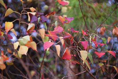 Photograph - Natchez Trace Fall by Helen Haw