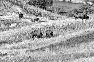 Indians Photograph - National Bison Range Wildlife Refuge Mt Usa by Christine Till